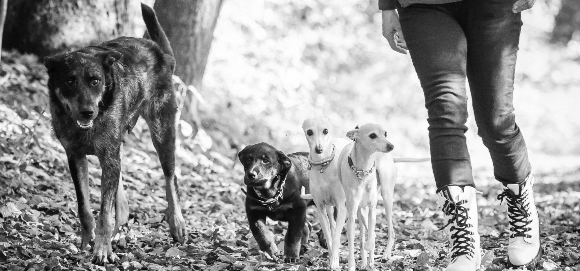 Hundeschule Grabenstätt